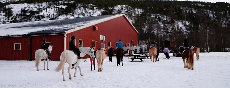 Ponnigjengen har stallvakt lørdag fra kl 08-14, og tar seg en liten ridetur mellom øktene. 13. desember 2014.