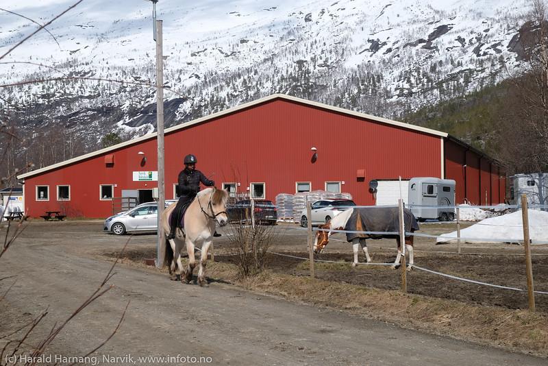 Narvik rideskole, 9. mai 2020