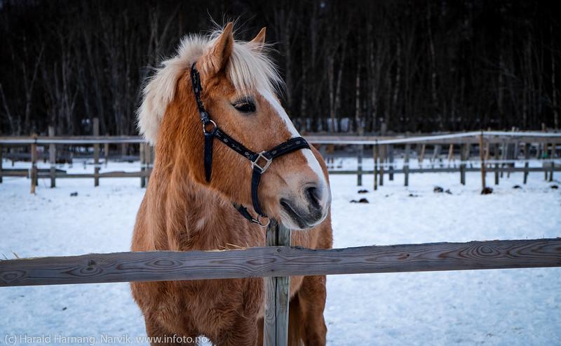 """""""Liven"""". Narvik Ridesenter, 13. desember 2014."""