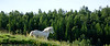Øvergård Inn på tunet - Gårdsopplevelser i Ballangen