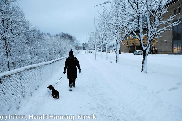 Tur med hunden, E6, Narvik Storsenter til høyre, februar 2010