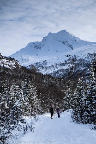 """Den sovende dronning og Håkviktind (Lilletind) fotografert fra Håkvikskogen. Dronninga er herfra ikke like """"majestetisk"""" som fra Narvik, men godt gjenkjennbar. Mars 2016"""