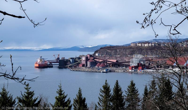 Narvik havn, med ny kai midt på og losseanlegg til høyre under bygging. Ved kai 5 ligger: Greske Samjohn Dream, bulk carrier. Skipet er 300 meter langt og 51 m bredt, med andre ord som tre fotballbaner på rad.