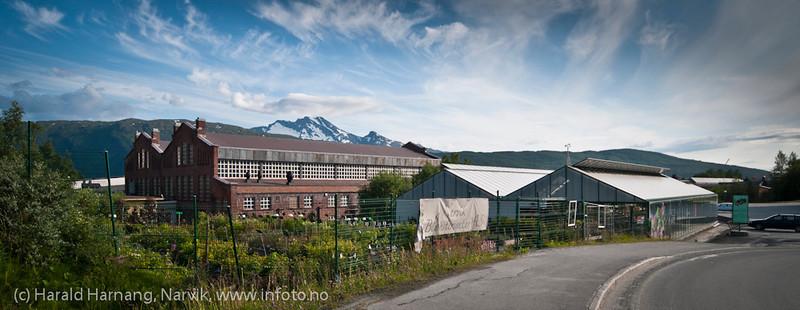 Narvik blomstersenter med en noe mer monumental bygning i bakgrunnen: De gamle jernbaneverkstedhallene.