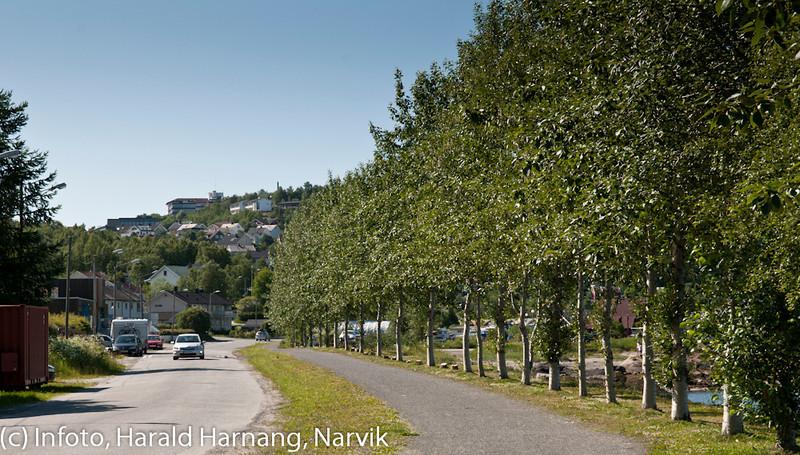 Aléen med sibirlerk ble for dominerende og tok utstikten for mange Taraldsvik-boere. Det ble et kompromiss, og 2 av 3 trær ble kappet foran husene.