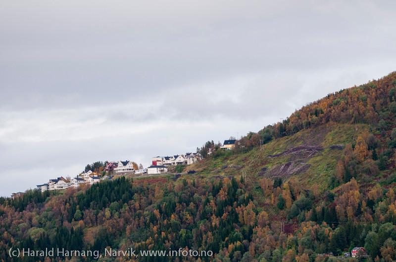 Mulig utbyggingsområde ved Skistua-feltet , ryddet og klart.
