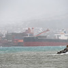 Lita fyrlykt på moloen på Ankenes. Bak malmskip for lasting ved kai 5 på LKABs anlegg. Rufsevær, Narvik havn, 8. mars 2014.