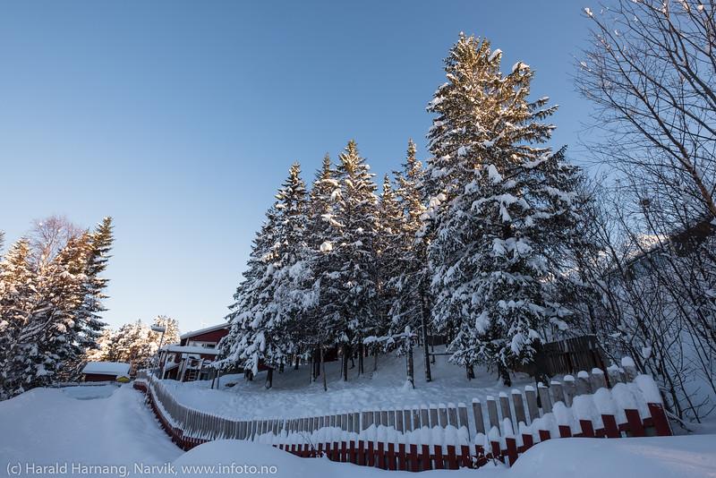 Sol og snø