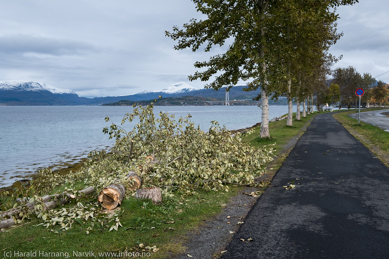 Trær i strandveien.