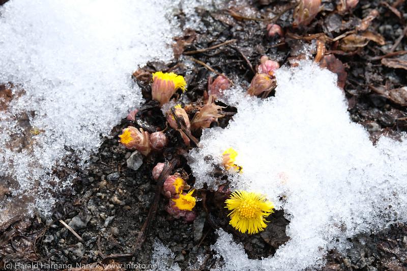 Våren i anmarsj, 15. april 2020