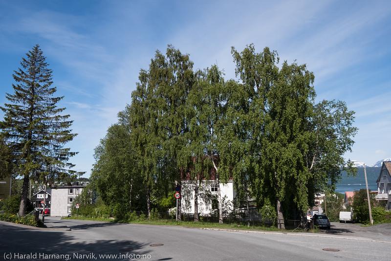 Tore Hunds gate 34, Narvik