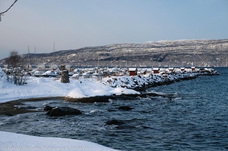 Moloen i Vassvik, 26. januar 2020