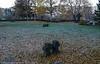 Krigskirkegård og minnelund