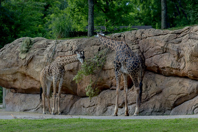 Nashville Zoo July 2017