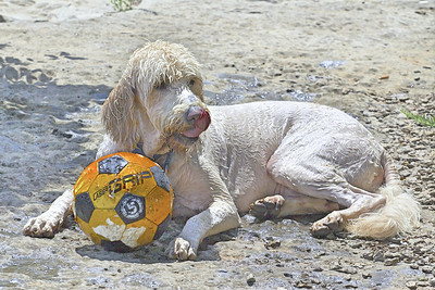 barkley and ball
