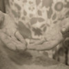 NA Tenaya-hands ver2-2