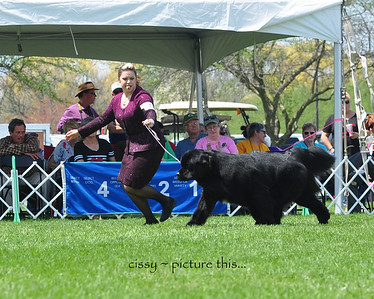 National 2018 Breed Continued