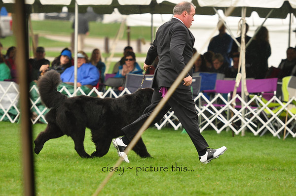 National 2018 Reg. Class dogs 3 and 4
