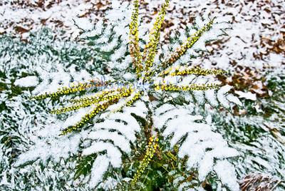 smug mug flora winterstar