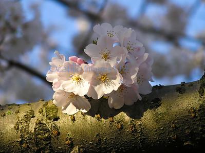 D flora blossoms close
