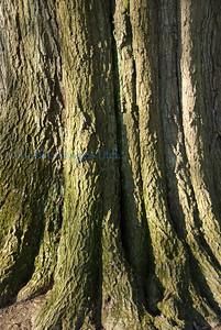 arbo april 2013 oak near