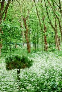 F flora glade