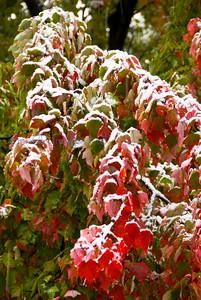 Fix flora snow on leaves