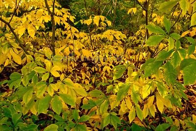 A flora yellow jungle