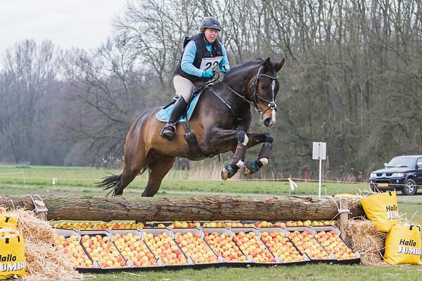 B Horses Amsterdamse Bos 2016
