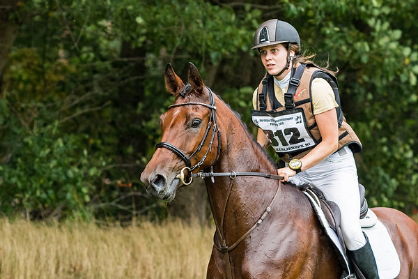 M Horses Norg 2016