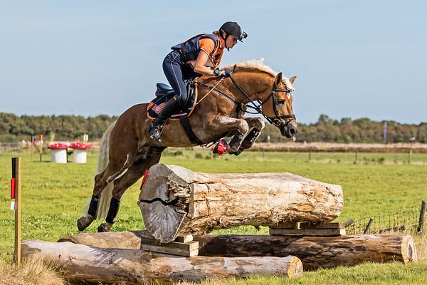 Z Horses Texel 2016