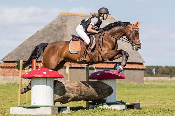 B Horses Texel 2016