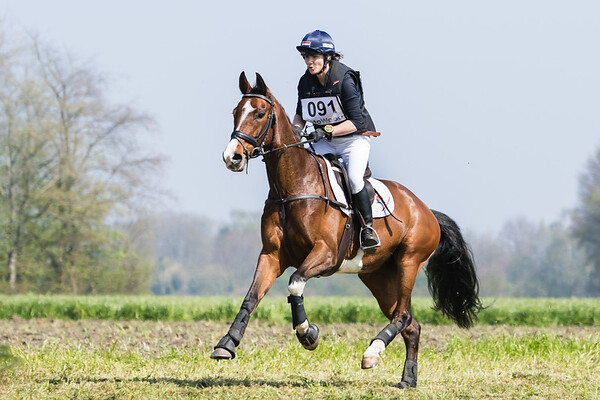 B Horses Etten-Leur 2017