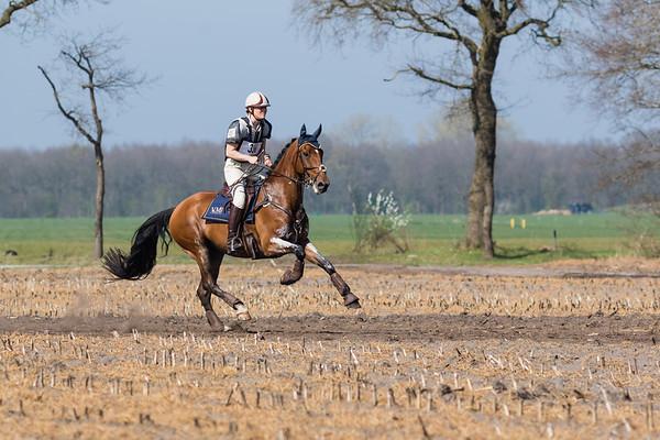 Z Horses Westerbork 2017