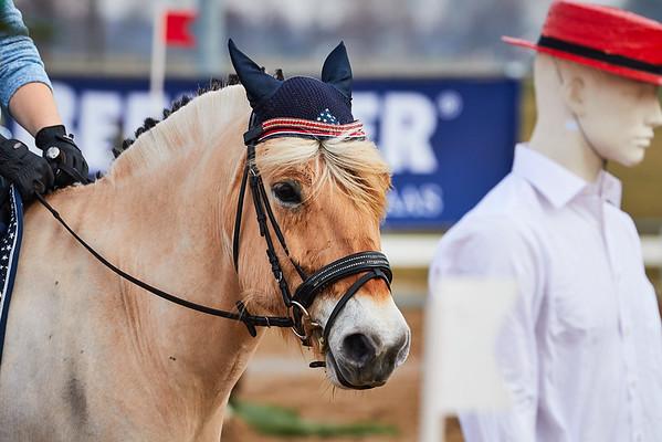 BB Horses Middenbeemster 2018
