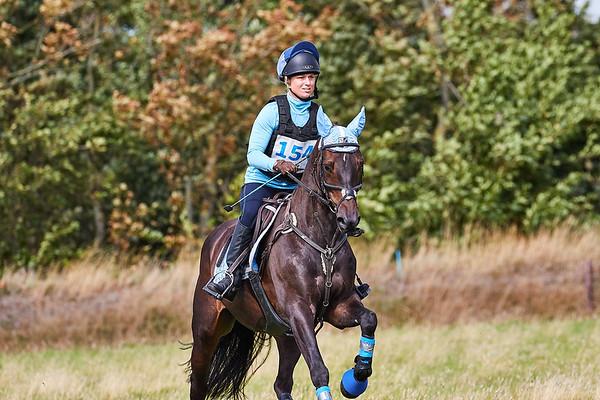 B Horses Texel 2018