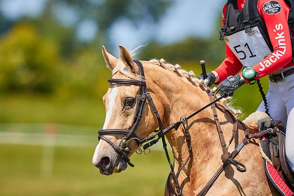 M Ponies Clusius Event 2019