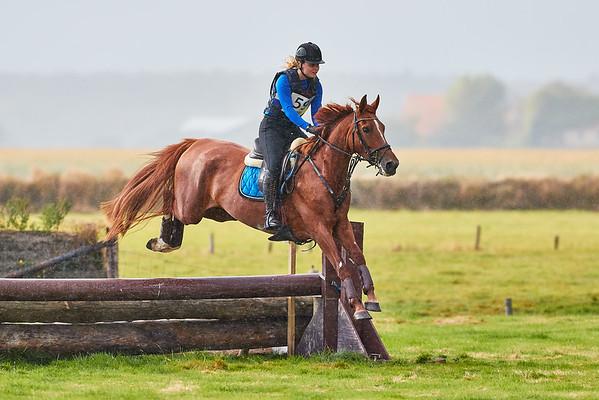 B Horses Texel 2019