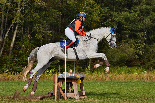 B Horses Neede 2019