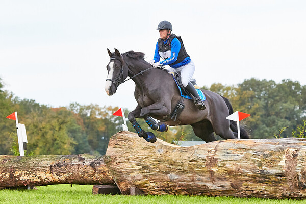 B Horses Barchem 2019