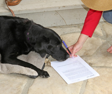 Abby signs her photo release!  good girl!