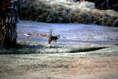 Death Valley, CA 086