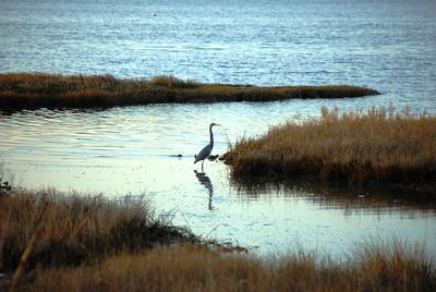 4-11-13,Chincoteague, Assateague Island, MD 028