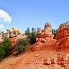 Red Canyon is part of Utah's Dixie National Forest