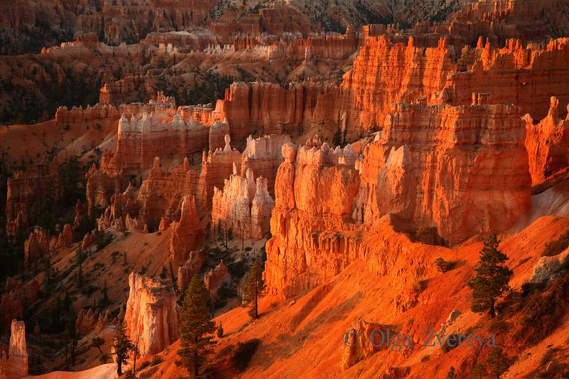 <p>Morning at Bryce Canyon National Park, Utah, USA</p>