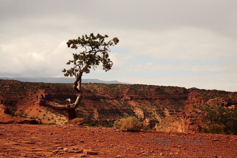 <p>The tree, Capitol Reef National Park, Utah, USA</p>