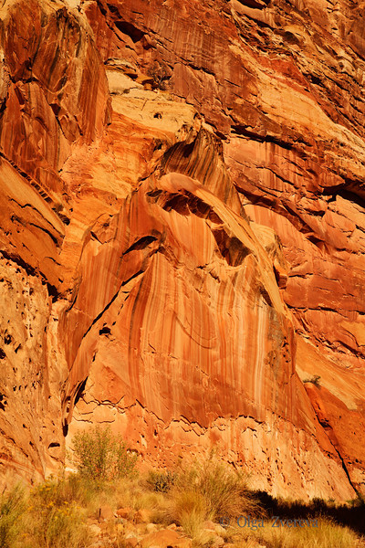 <p>Golden Cliff, Capitol Reef National Park, Utah, USA</p>