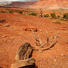 <p>Dead Tree, Capitol Reef National Park, Utah, USA</p>