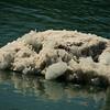 <p>Iceberg, Glacier Bay National Park, Alaska, USA</p>