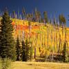 <p>Fall colour, North Rim, Grand Canyon National Park, Arizona, USA</p> <p>September 2009</p>